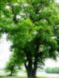 A  l'ombre des chênes